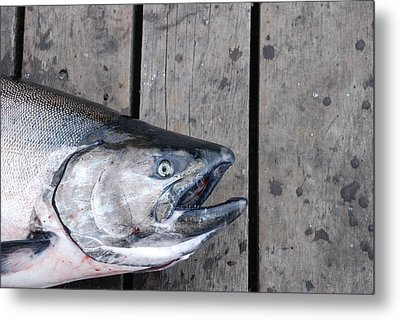 Salmon On Deck Metal Print
