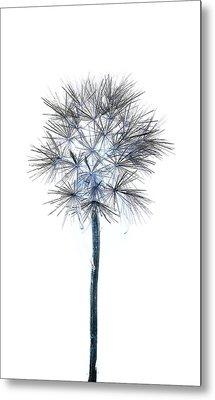 Salsify Seed Head Metal Print by Gareth Davies