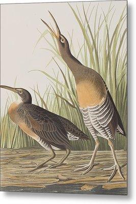Salt Water Marsh Hen Metal Print by John James Audubon
