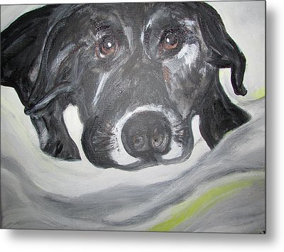 Sweet Sami Black Lab Metal Print