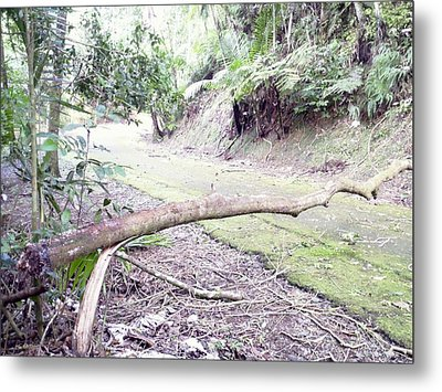 San Andres Echologycal Path At Guilarte's Forest Metal Print