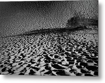 Metal Print featuring the photograph Sand Dune by Catherine Lau