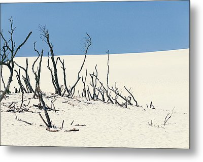 Sand Dune With Dead Trees Metal Print by Chevy Fleet