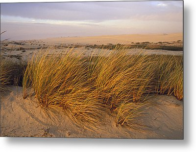 Sand Dunes At Oso Flaco Nature Metal Print by Rich Reid