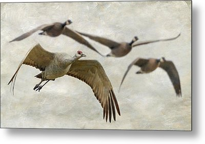 Metal Print featuring the photograph Sandhill Crane And Company by Angie Vogel