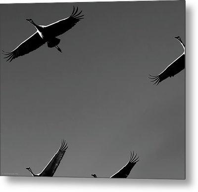 Metal Print featuring the photograph Sandhill Crane In Flight by Britt Runyon