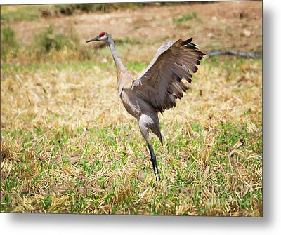 Metal Print featuring the photograph Sandhill Crane Morning Stretch by Ricky L Jones