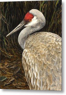 Metal Print featuring the painting Sandhill Crane - Realistic Bird Wildlife Art by Karen Whitworth