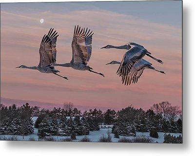 Sandhill Cranes In Flight Metal Print by Patti Deters