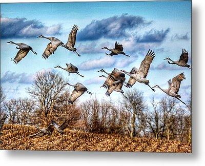 Metal Print featuring the photograph Sandhill Cranes by Sumoflam Photography