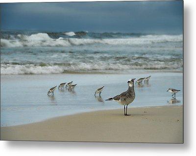 Sandpiper Beach Metal Print