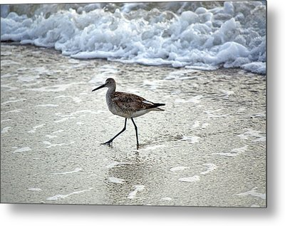 Sandpiper Escaping The Waves Metal Print