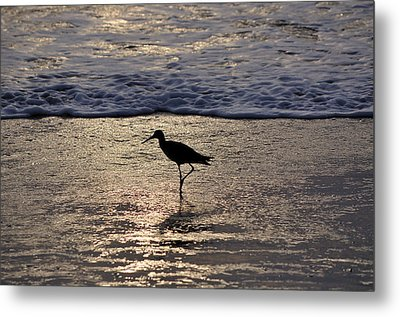 Sandpiper On A Golden Beach Metal Print by Kenneth Albin