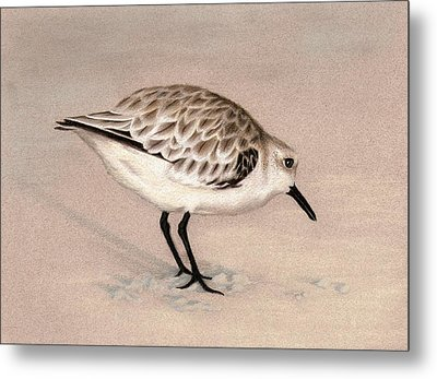 Sandpiper On Sand Metal Print by Heather Mitchell