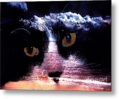 Sandy Paws Metal Print by Clayton Bruster