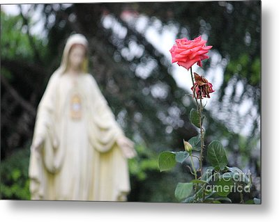 Metal Print featuring the photograph Santa Catalina Rose by Wilko Van de Kamp