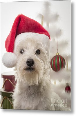Santa Dog Is Coming To Town Metal Print by Edward Fielding