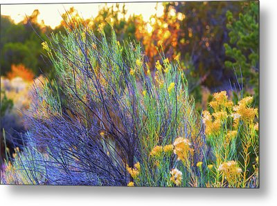 Santa Fe Beauty Metal Print by Stephen Anderson