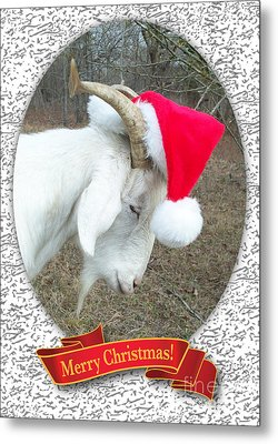 Metal Print featuring the photograph Santa Goat by Cheryl McClure
