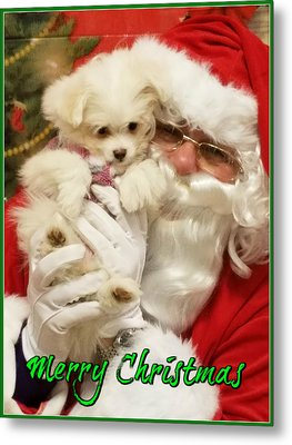 Metal Print featuring the painting Santa Paws  by Darren Robinson
