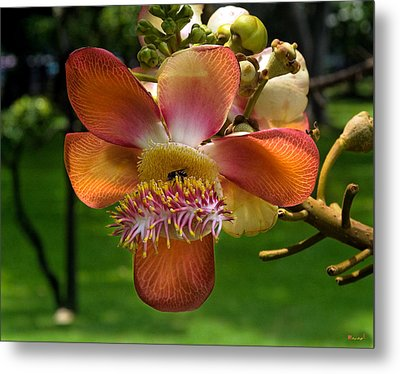 Sara Tree Flower Dthb104 Metal Print by Gerry Gantt