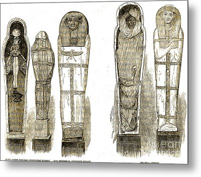 Sarcophagi And Egyptian Mummies Metal Print by Wellcome Images