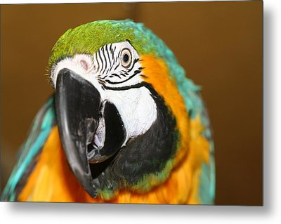 Metal Print featuring the photograph Sassy Blue And Gold Macaw by Diane Merkle