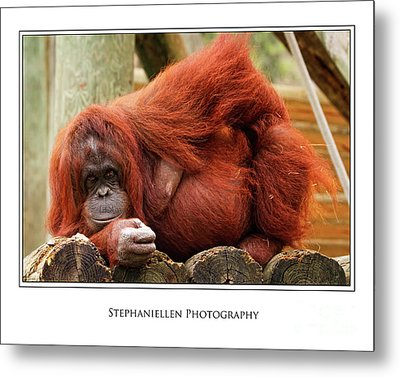 Sassy Orangutan Metal Print by Stephanie Hayes