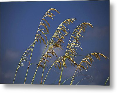 Metal Print featuring the photograph Saturday Sway by Michiale Schneider