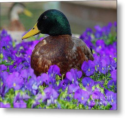 Say Quack Metal Print