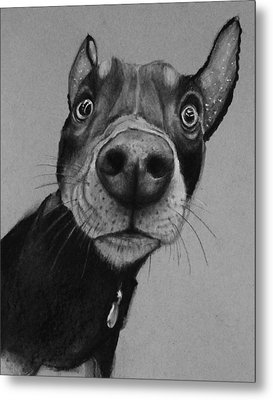 Say What?  Metal Print by Jean Cormier
