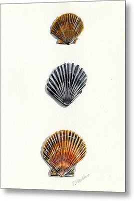 Scallop Shell Trio Metal Print by Sheryl Heatherly Hawkins