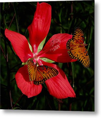 Scarlet Beauty Metal Print by Peg Urban