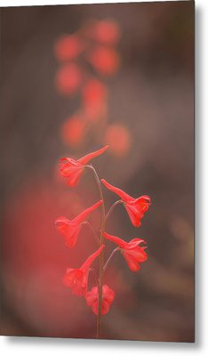 Metal Print featuring the photograph Scarlet Larkspur Clouds by Alexander Kunz