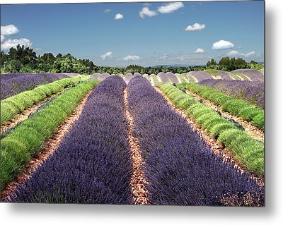 Scent Of Lavender Of Provence Metal Print by Any.colour.you.like Photography
