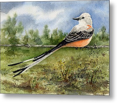Scissor-tail Flycatcher Metal Print by Sam Sidders