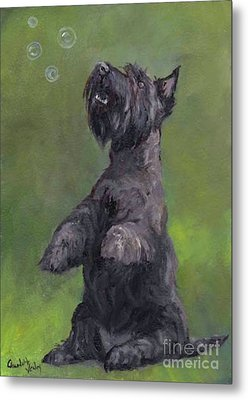Scottie Likes Bubbles Metal Print by Charlotte Yealey