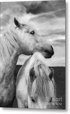 Scottish Horses Metal Print by Diane Diederich