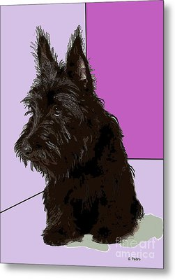 Scottish Terrier Metal Print by George Pedro