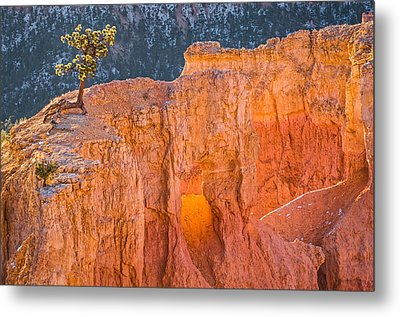 Scrappy Little Tree - Bryce Canyon National Park Photograph Metal Print