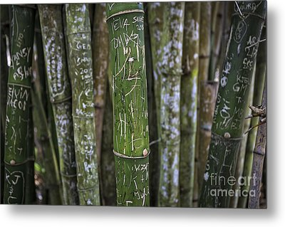 Scratched Bamboo Metal Print