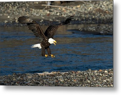 Screaming Eagle II Metal Print