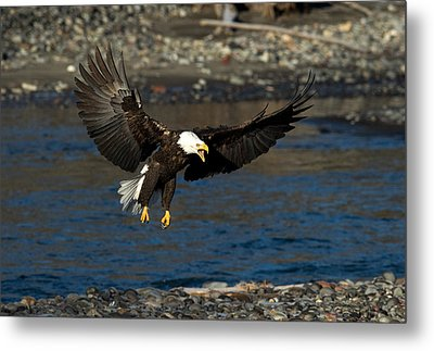 Screaming Eagle Metal Print