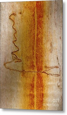 Metal Print featuring the photograph Scribbly Gum Bark by Werner Padarin