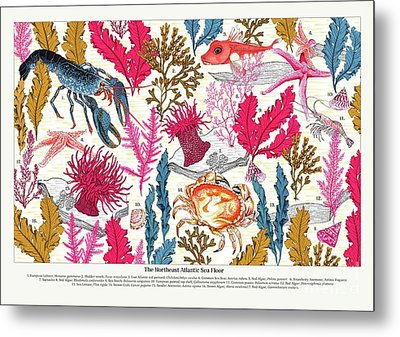 Sea Bed Annotated Metal Print by Jacqueline Colley