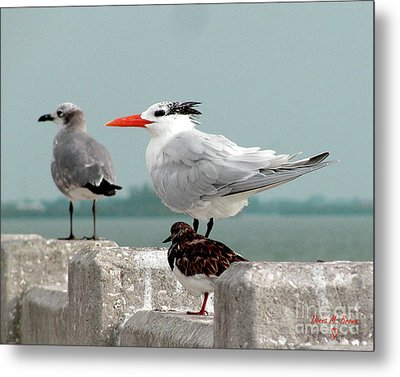 Metal Print featuring the photograph Sea Birds by Donna Brown