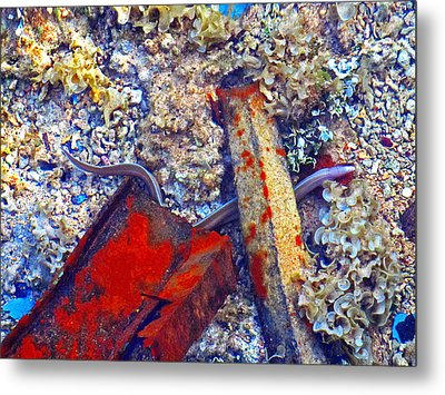 Sea. Corals. Rusty Iron And Little Moray.  Metal Print