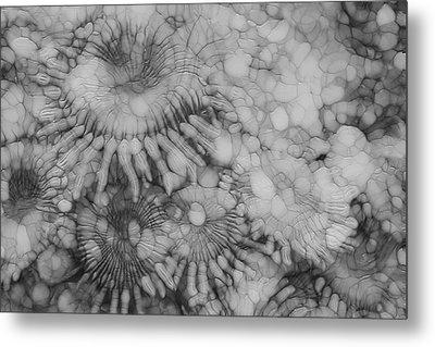 Sea Floor Metal Print by Jack Zulli