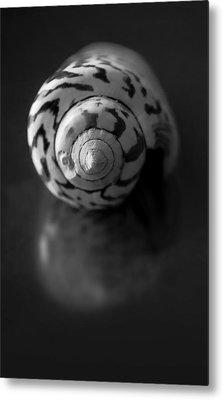 Sea Gem In Black And White Metal Print by Maggie Terlecki