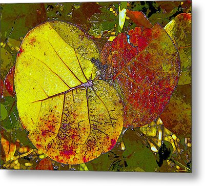 Sea Grape Leafs Metal Print by David Lee Thompson